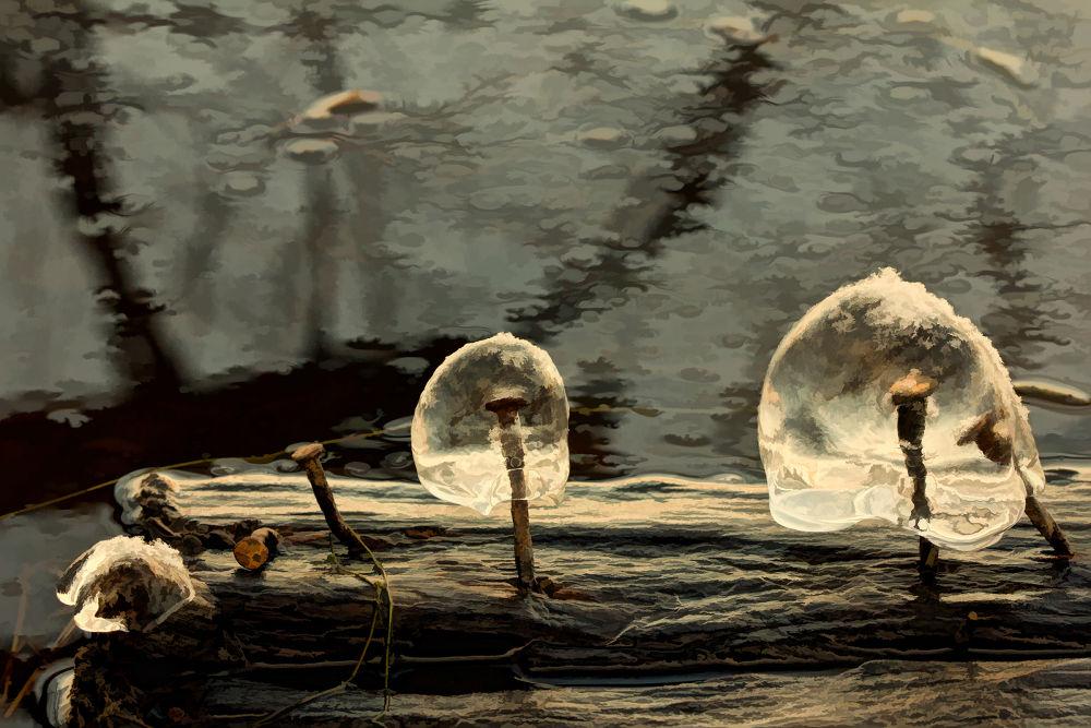 ice mushrooms caps with iron stems * Chapeaux de champignons sur tiges de fer by LucieGagnon