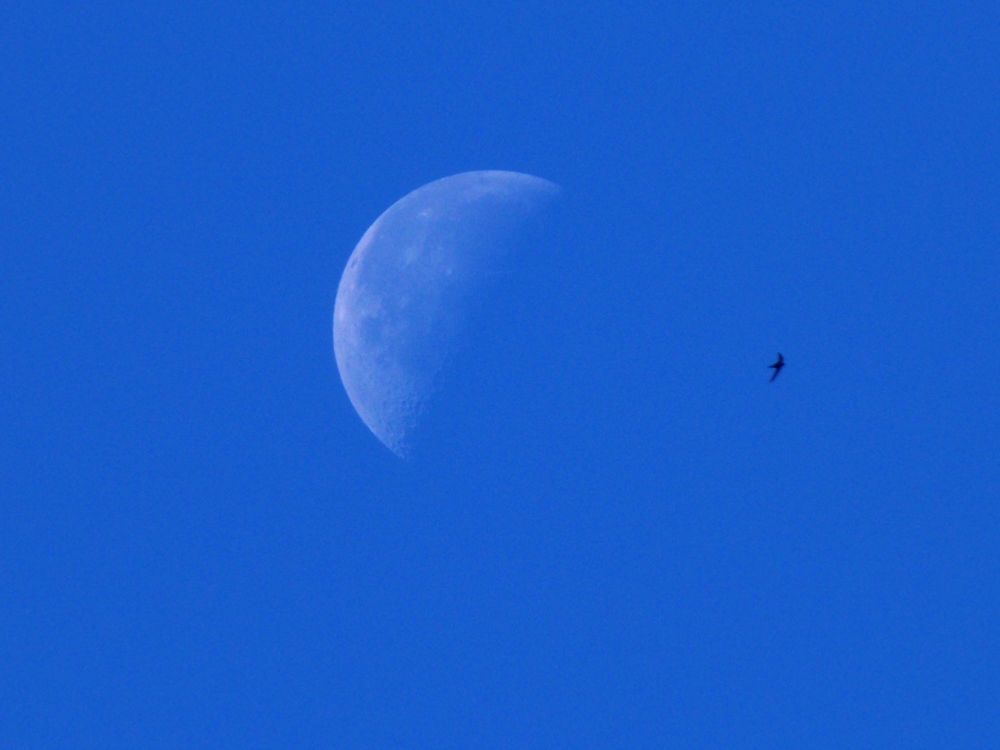 Bird and moon by Ema