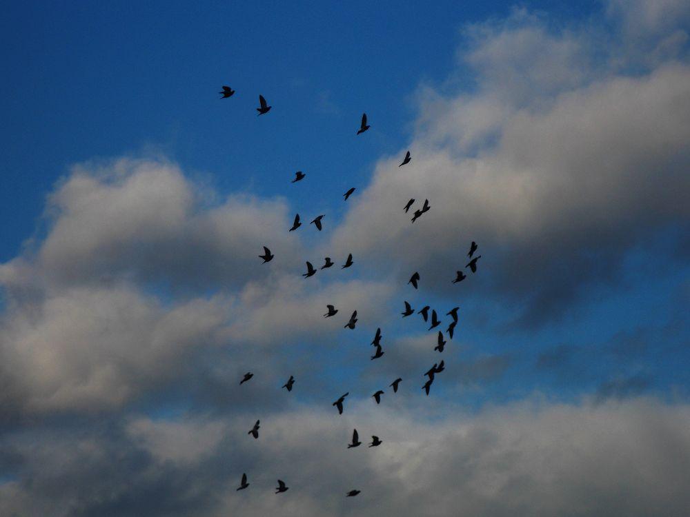Birds by Ema