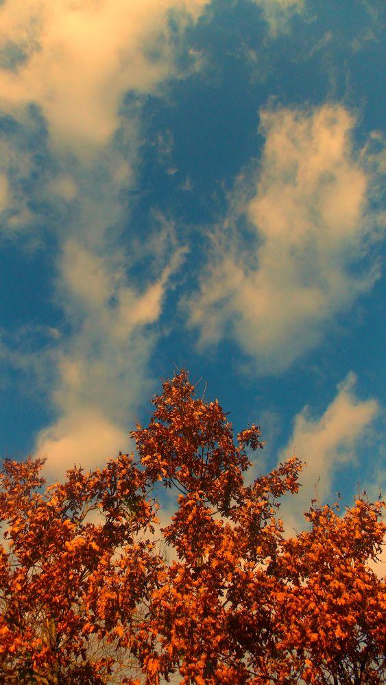 Tree by Ema