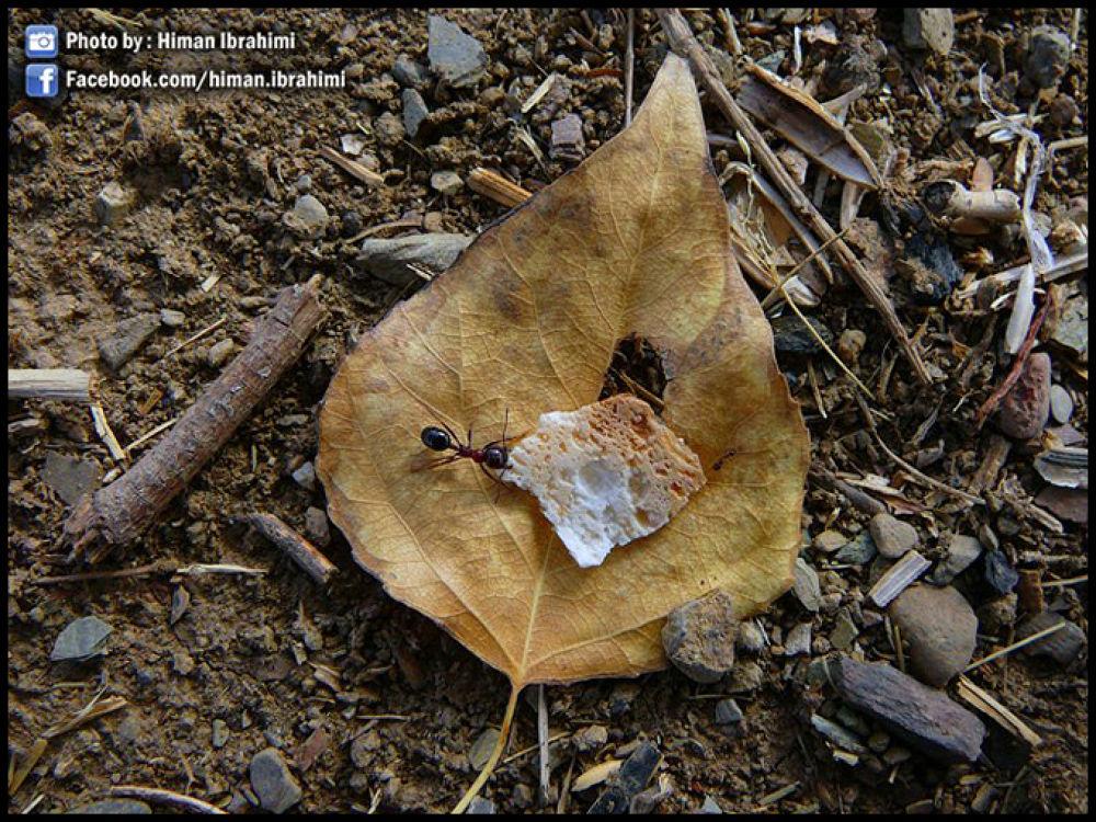 ant by himan ebrahimi