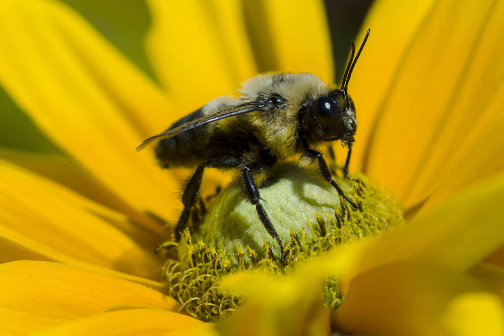 Pollinisation / Pollination by sevyl
