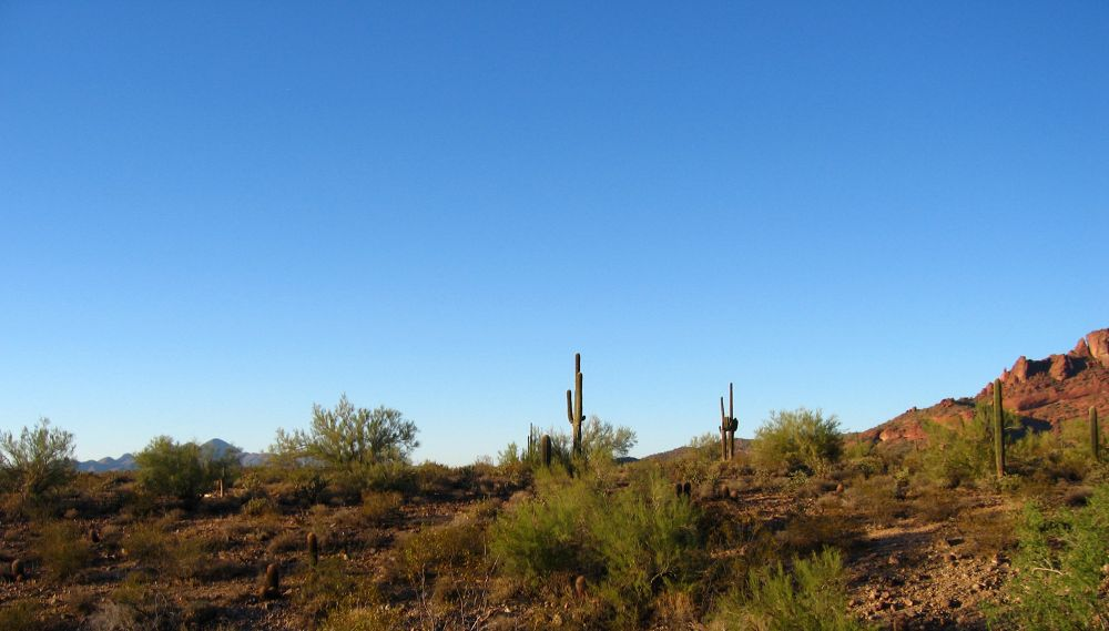 BooBoo in the Desert-023 by wNG iMAGE aND dESIGN