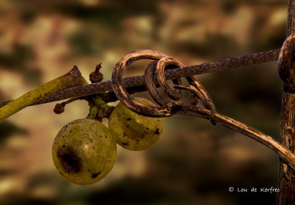 Autumn by Lou de Kerfrec