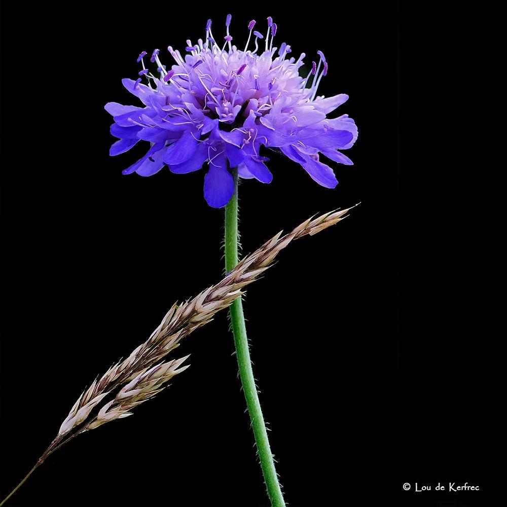 Flower in black ! by Lou de Kerfrec