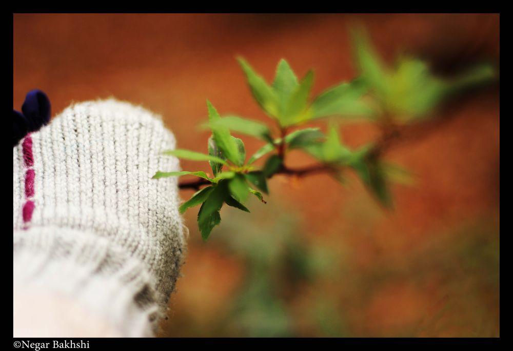 My Hand by Negar Bakhshi