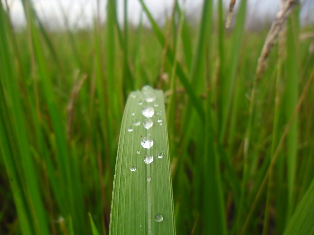 Rain drops by Cj Pingul