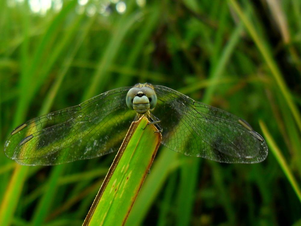 dragonfly:  by Cj Pingul