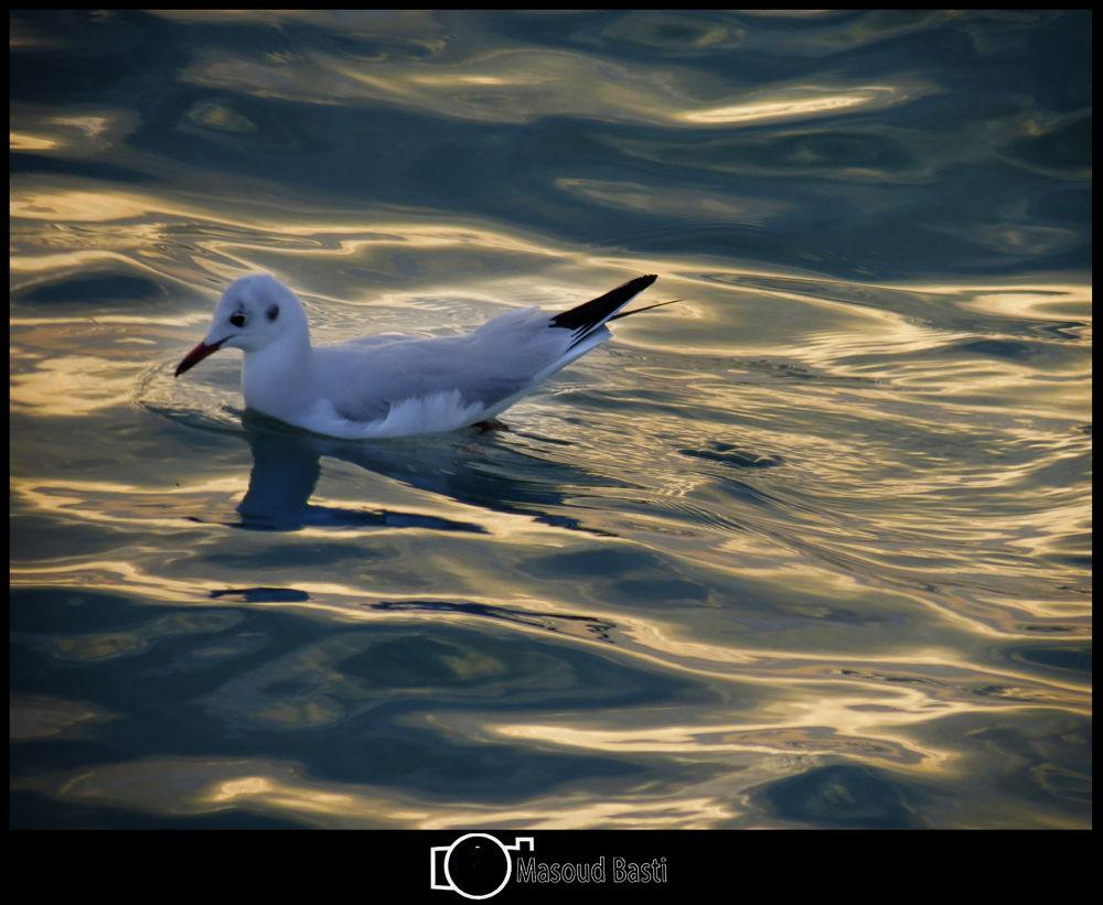 bird  by Masoud Basti