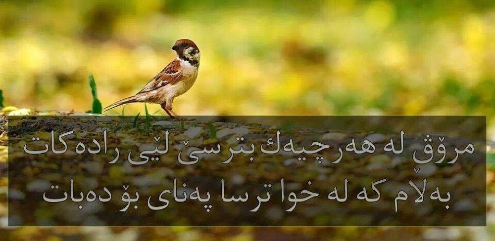 1479464_499096063543279_1929879752_n by reazahmad908