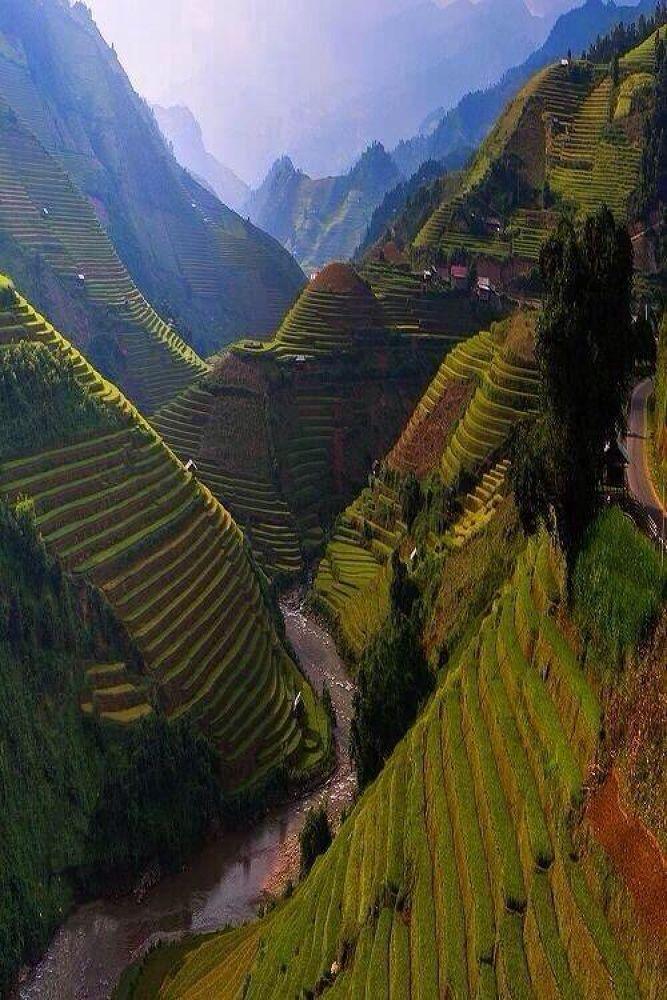 Rice terrace, Vietnam. by meghdadmachekpesht