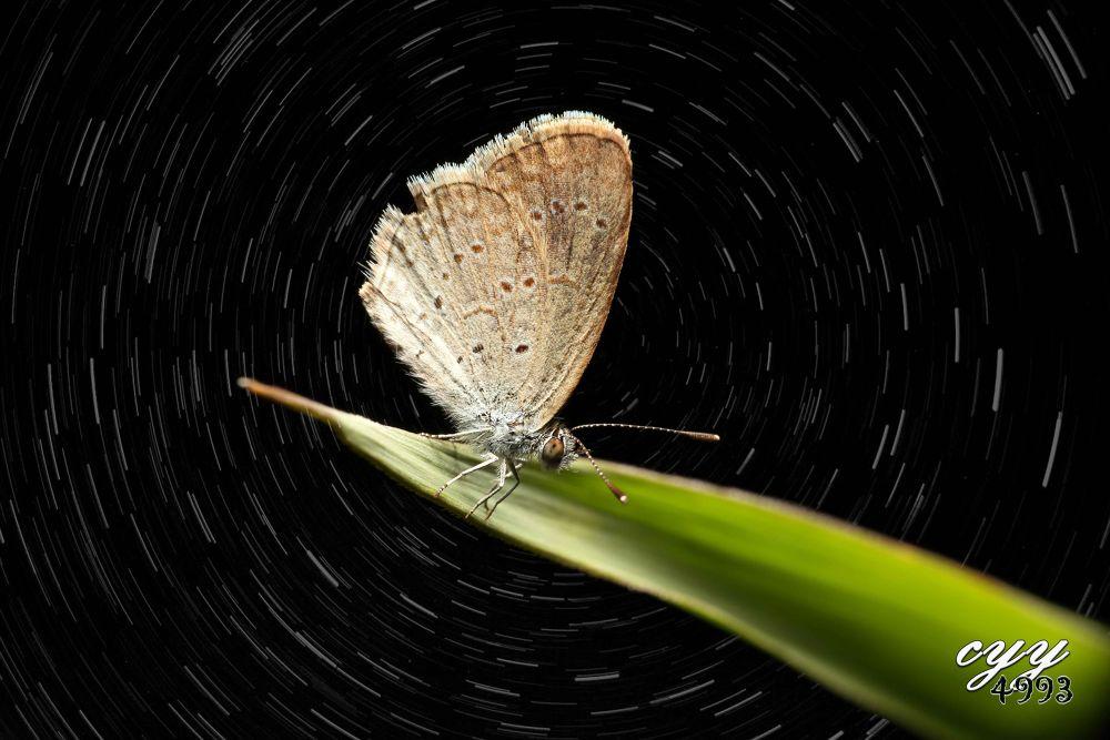 Lesser Grass Blue [Lycaenidae] Zizina Otis Riukuensis (Matsumura, 1929) 小灰蝶 by cyy4993