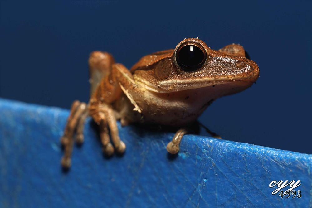Frog by cyy4993
