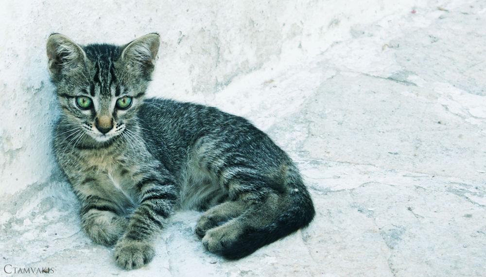 Kitty by CarolinaTamvakis