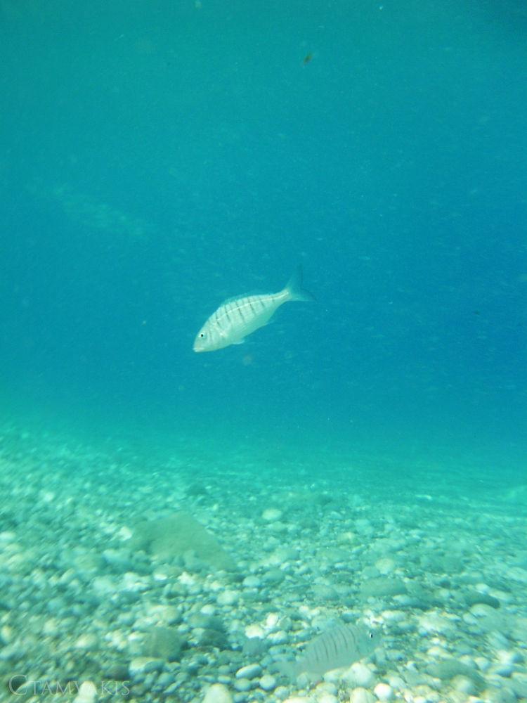 Underwater by CarolinaTamvakis