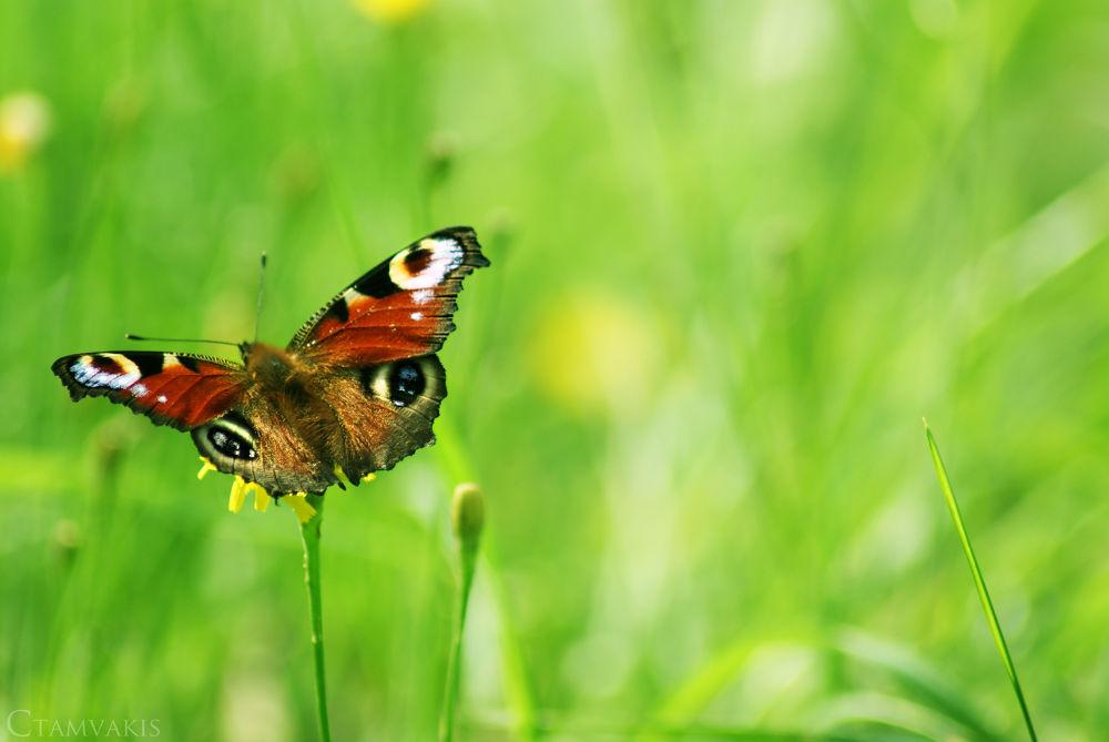 Butterfly fly away by CarolinaTamvakis