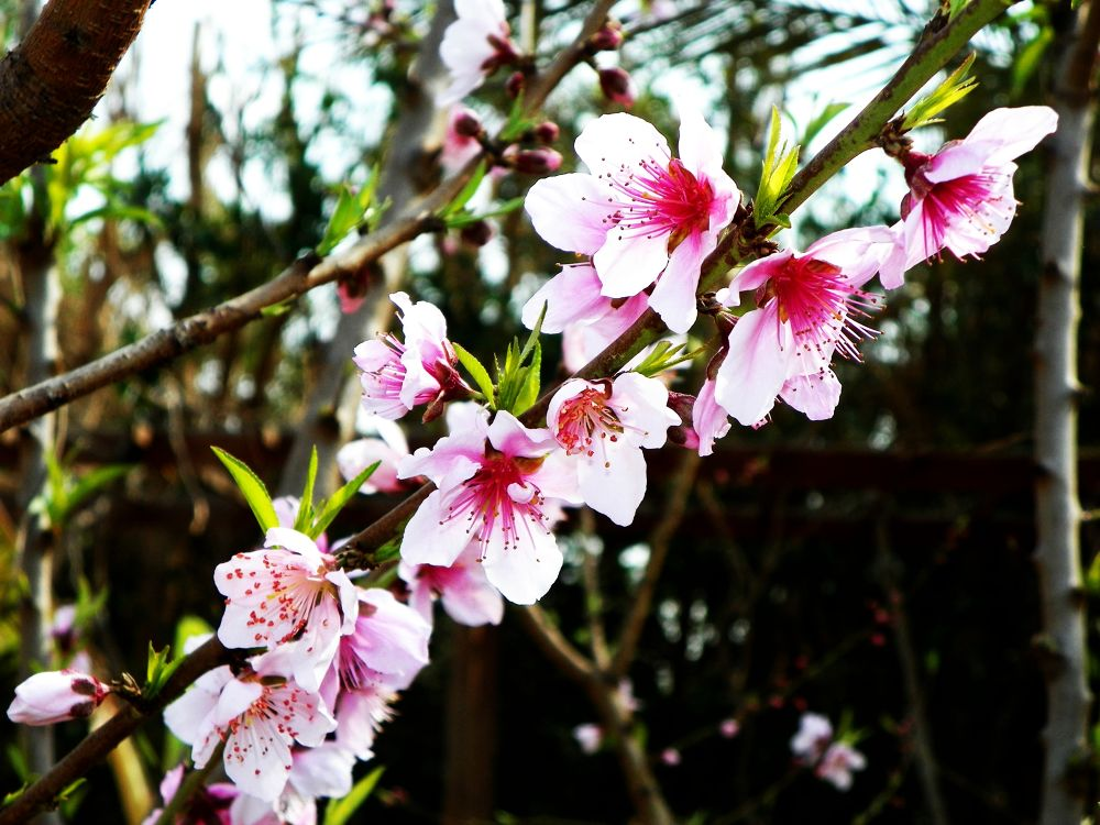 Blossoms by MariamAwad