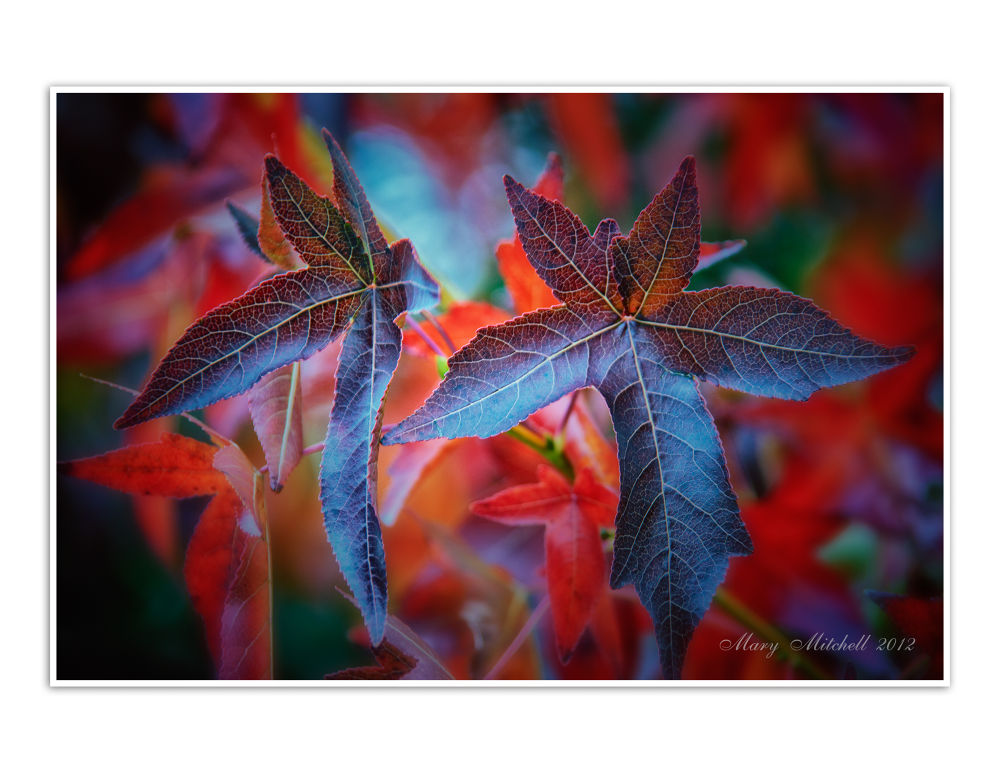 Fall Colors by Mary Mitchell