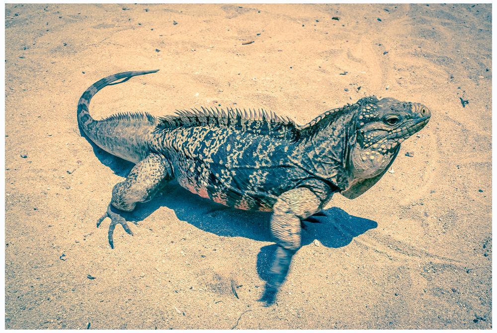 Iguane by Leo