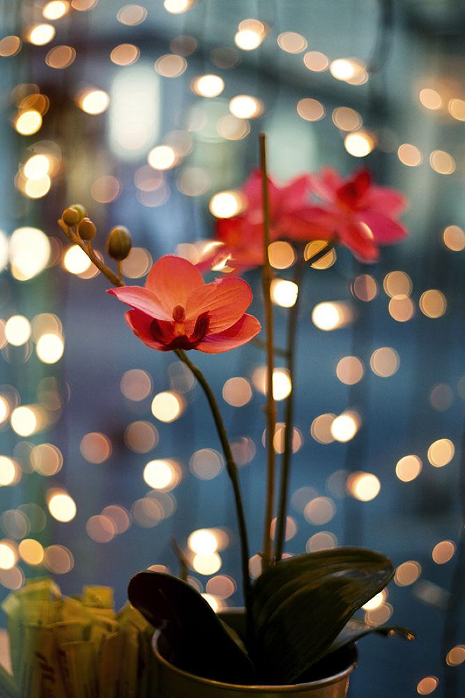 Background lights by Nina Masic