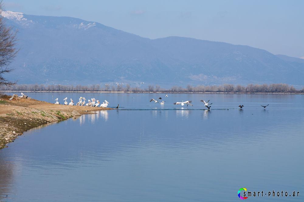 kerkini lake-4271 by vasiliskarapanagiotidis