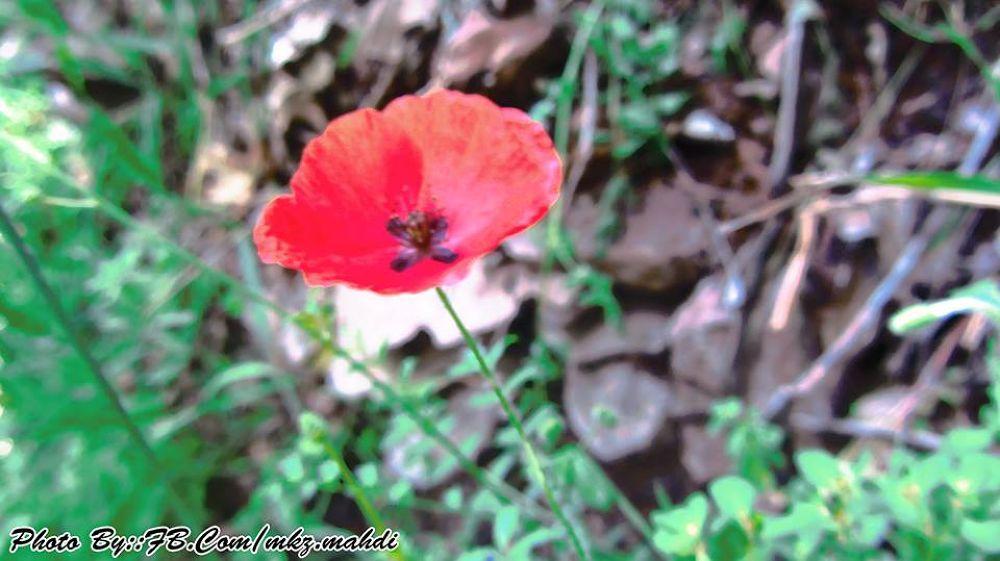 Photo By : FB.Com/mkz.mahdi by Mahdi Khaleghi