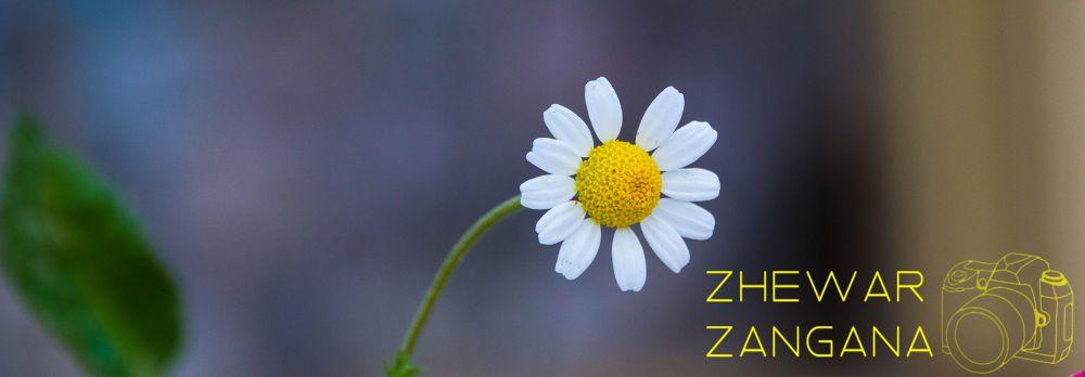 flower (Gull) by Zhewar Zangana