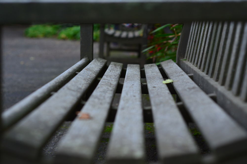 Bench by Lorna Anderson