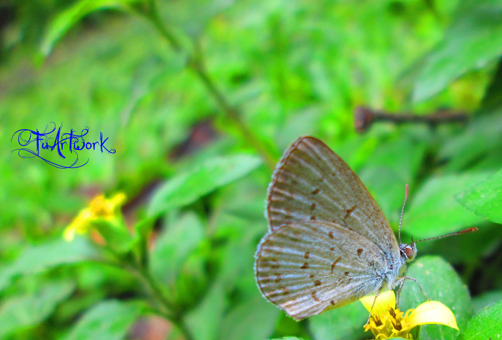 beauty of butterfly by Mukhtarul