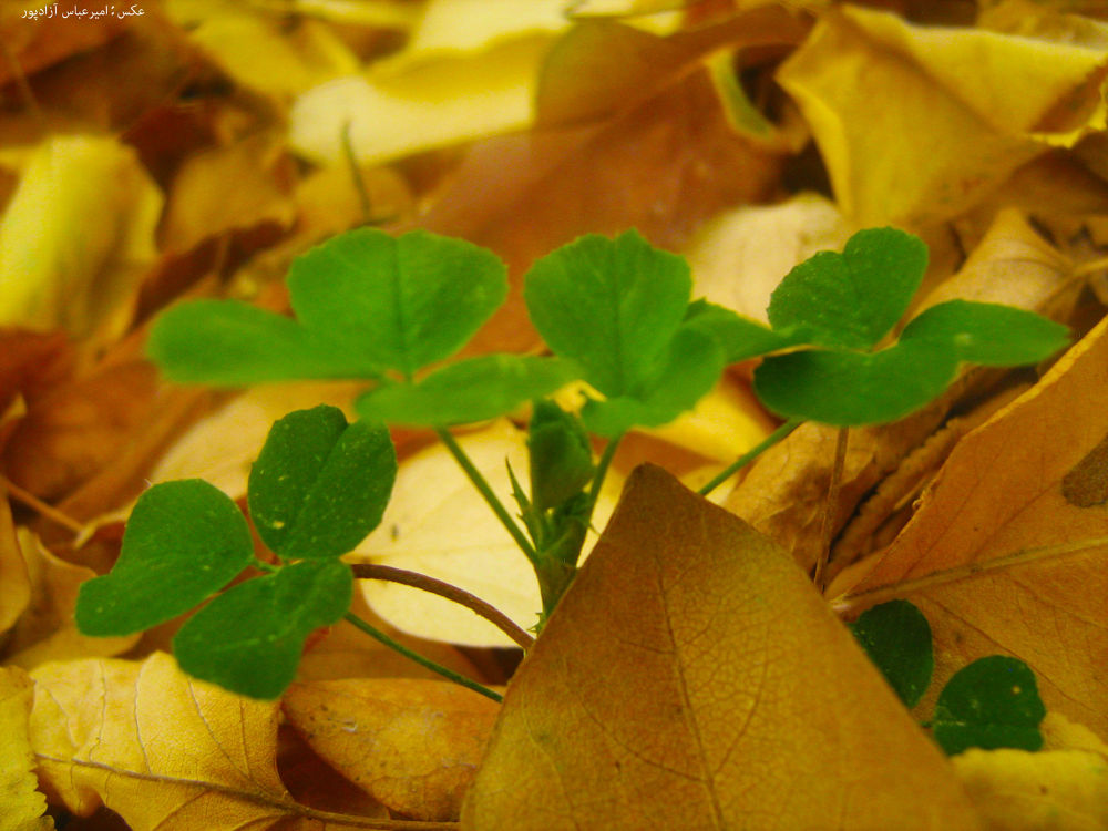 گیاه by amirabbasazadpour1