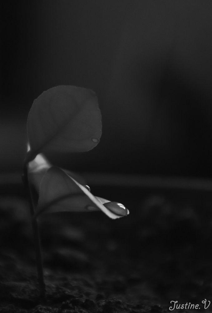 Juste une petite goutte d'eau... by Justine-Vdh