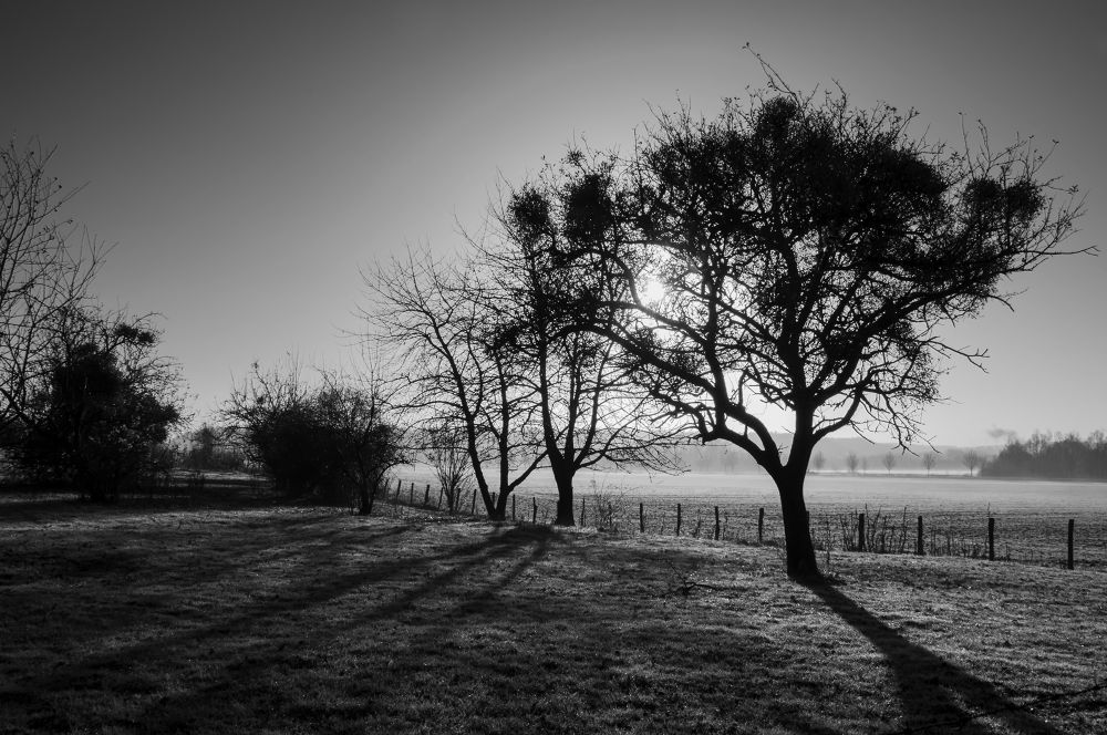 Morning, in black and white. by Justine-Vdh