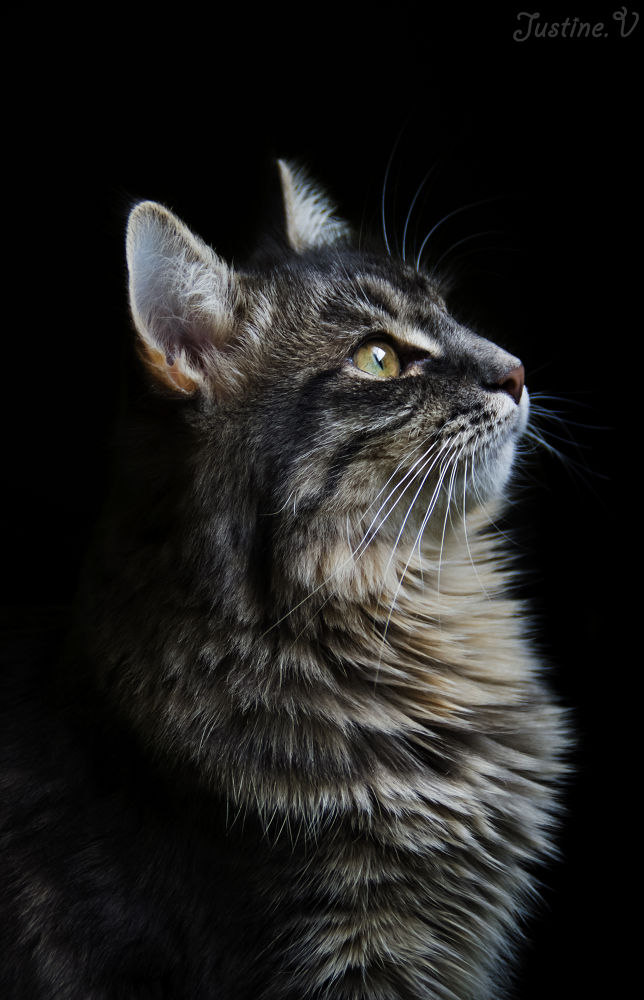 My lovely cat, Yoshie. by Justine-Vdh