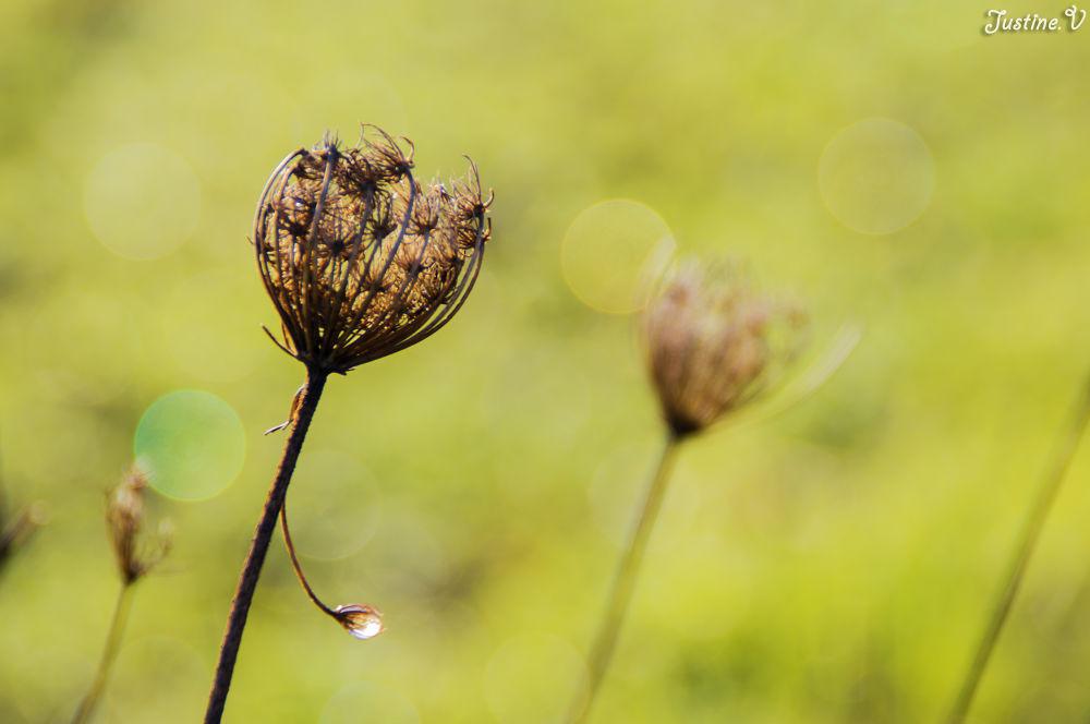 Nature morte. by Justine-Vdh