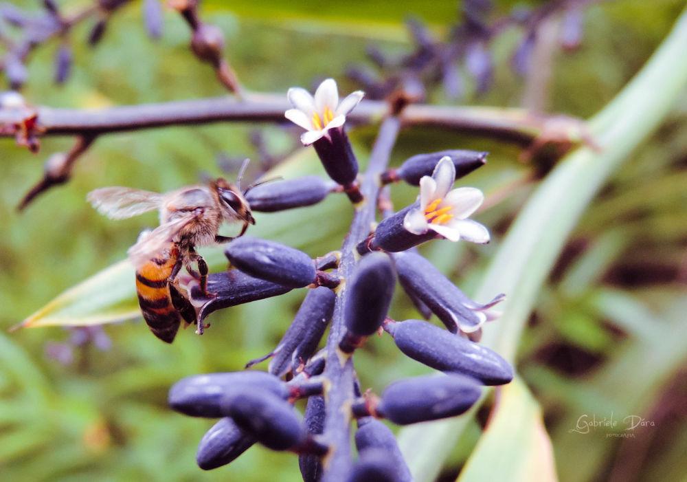 Néctar by Gabriele Petkowicz Kissel