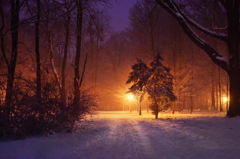 Lights by Marta Walla