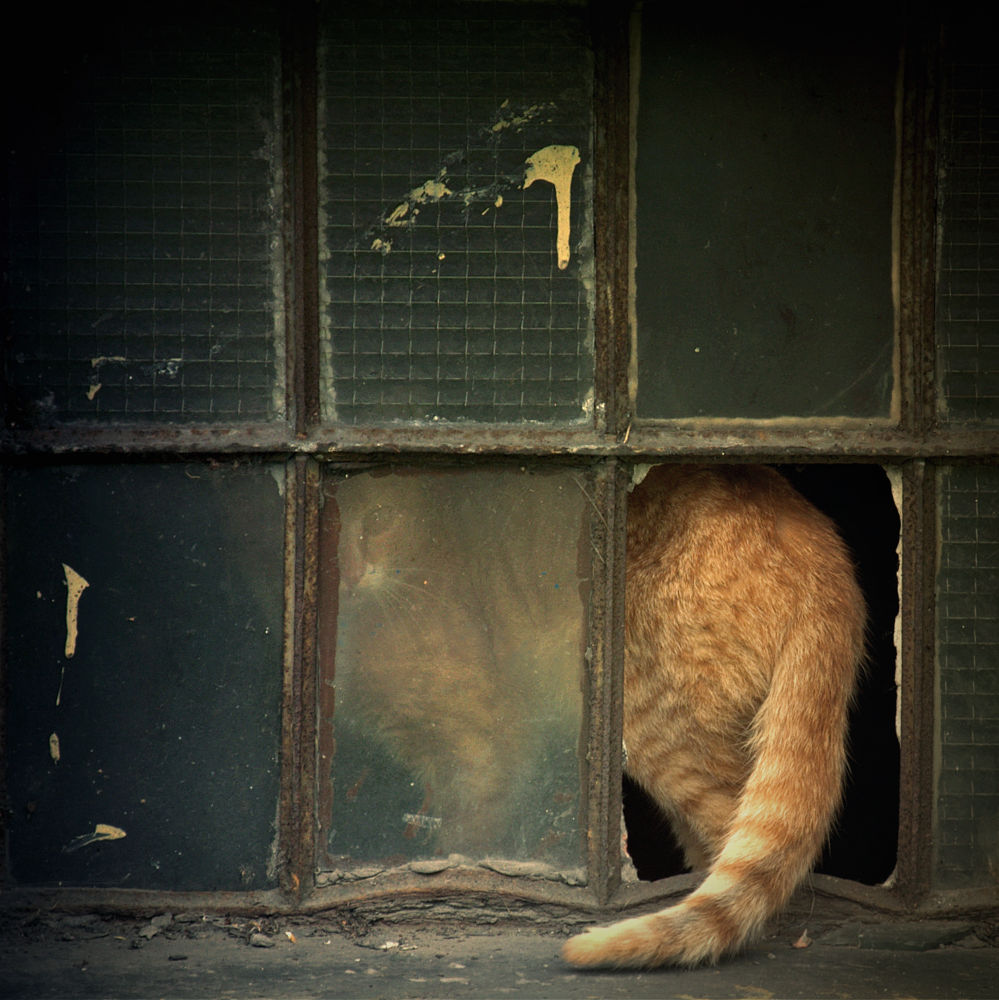 Photo in Animal #marta walla #cat #window #animal #deserter #runaway #funny