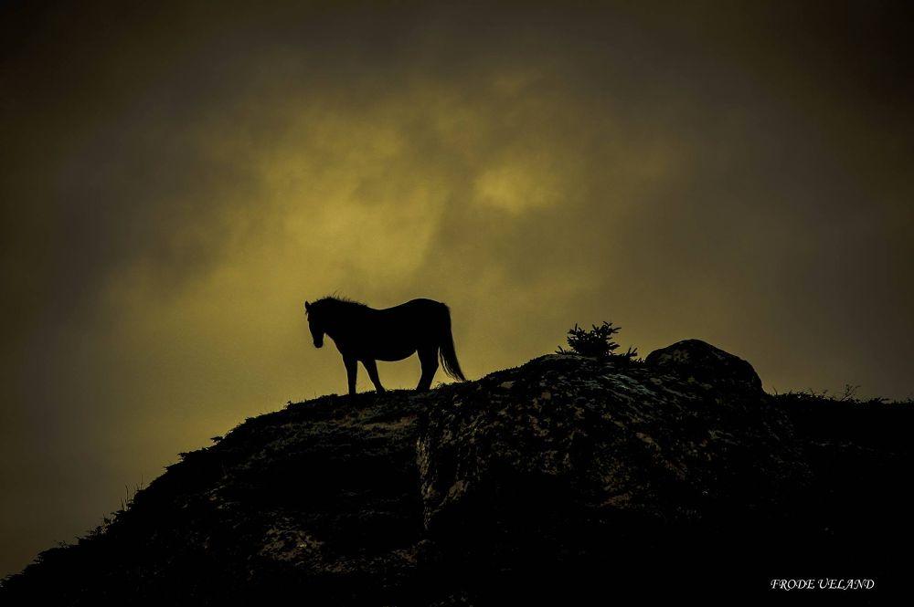 dark horse by frodeueland