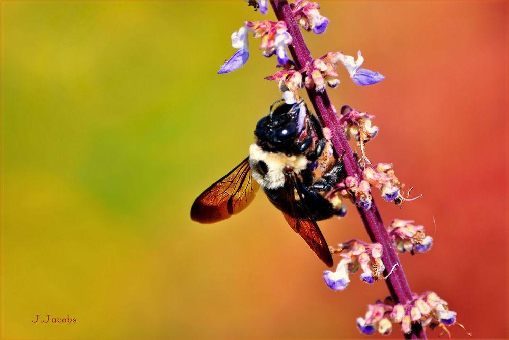 Bee by FreeBirdStudios