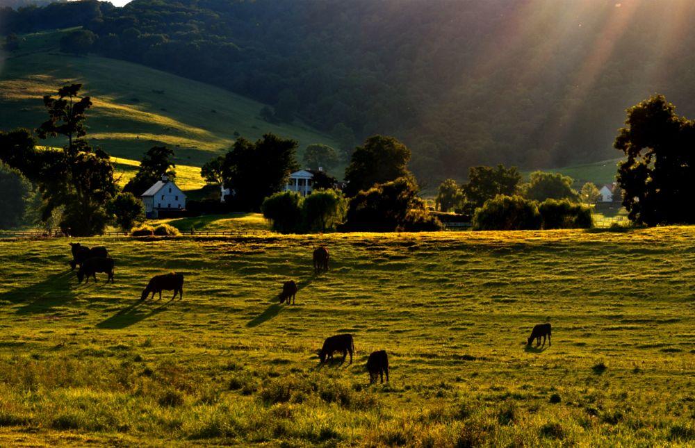 Virginia Countryside by FreeBirdStudios