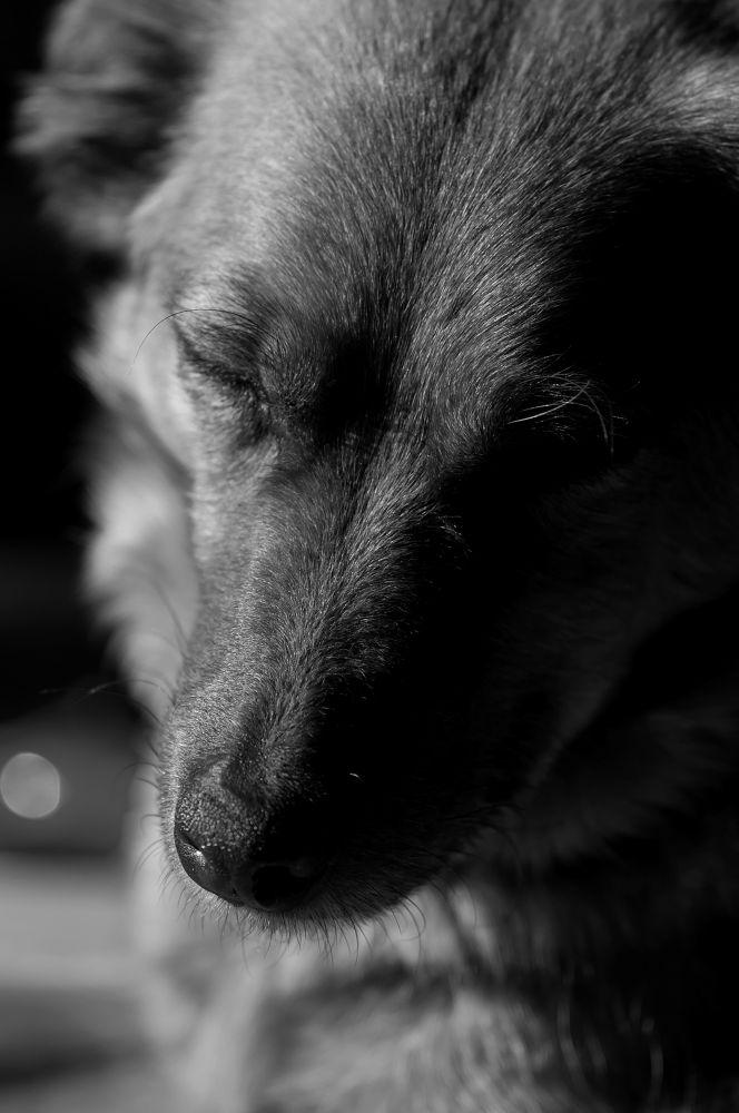 Sleepy dog by Daniël Schuiling