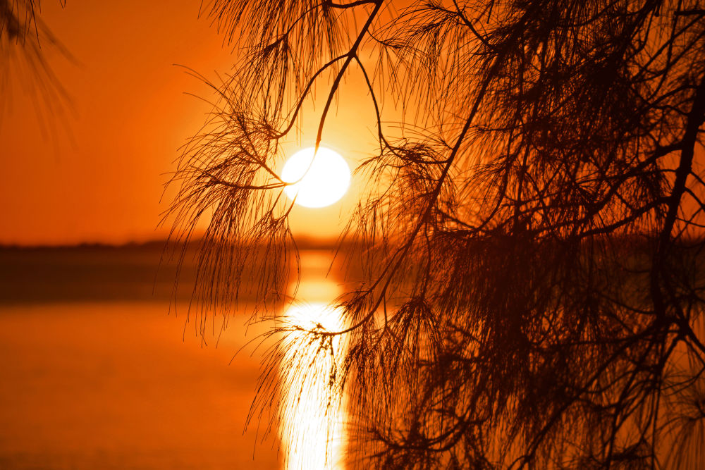 Sunset through the Tree by Shel Yetman
