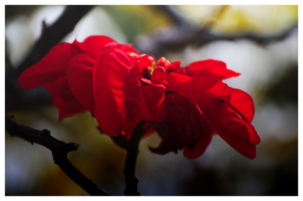 Photo in Nature #hills #nikon #flower #nature #red #rhodo