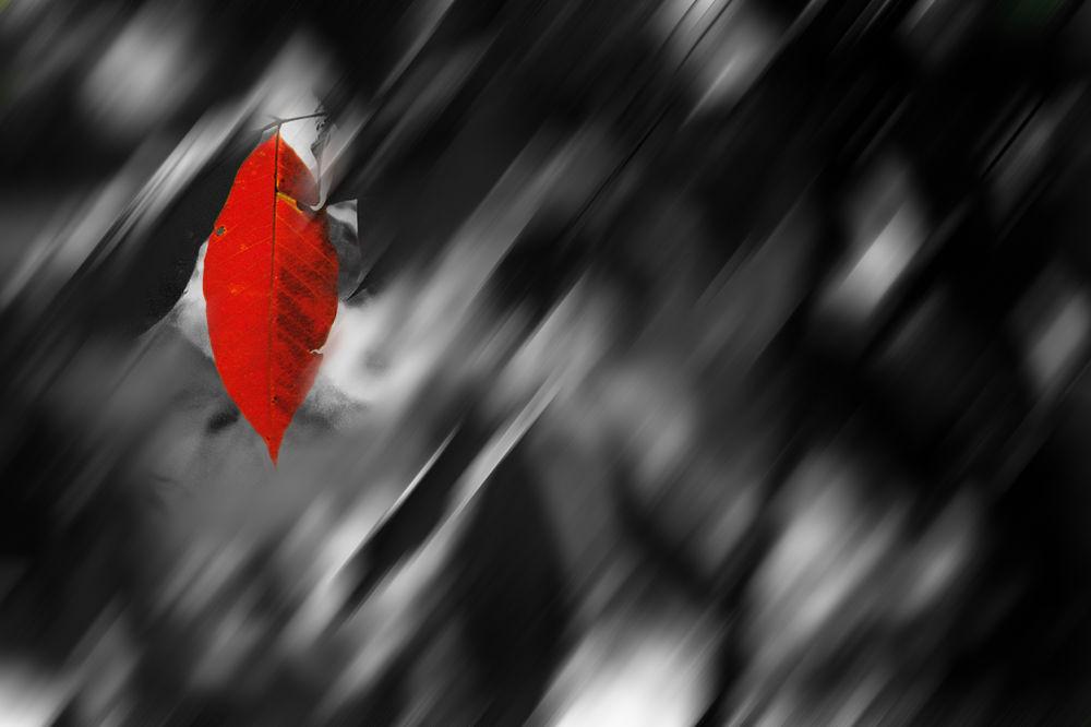 Red-Leaf  by HasbullahHashim