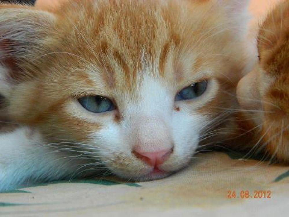 cat by hakankaracan07