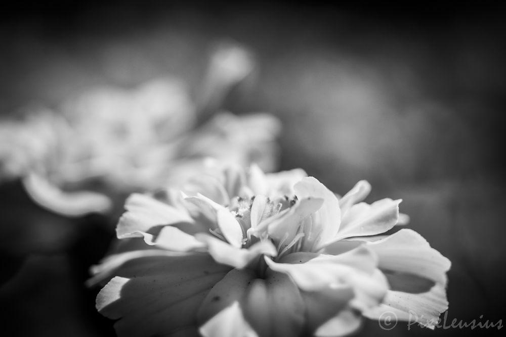 _DSC0510-21 by Leo PixelPop