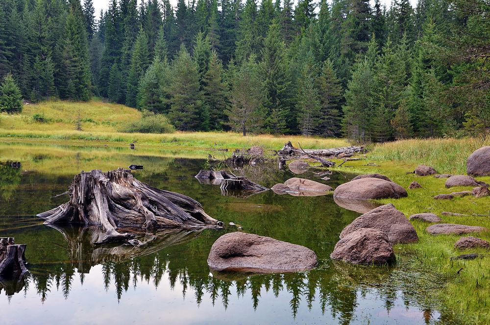 Dam Broad meadow Bulgaria by teddybg