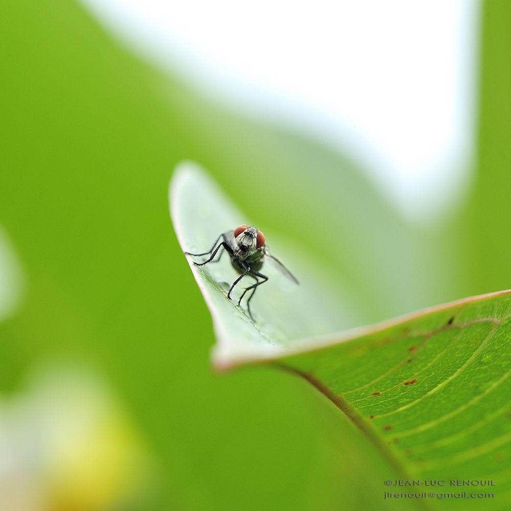 Fly on the go ! by Gieller
