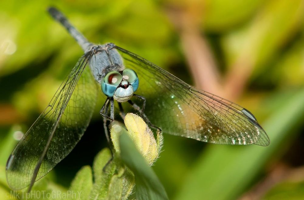 Photo in Macro #macro #morning #light #dragon fly #insects #flies