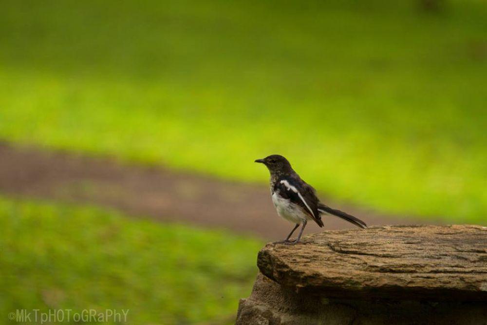 Photo in Animal #small bird #greenery